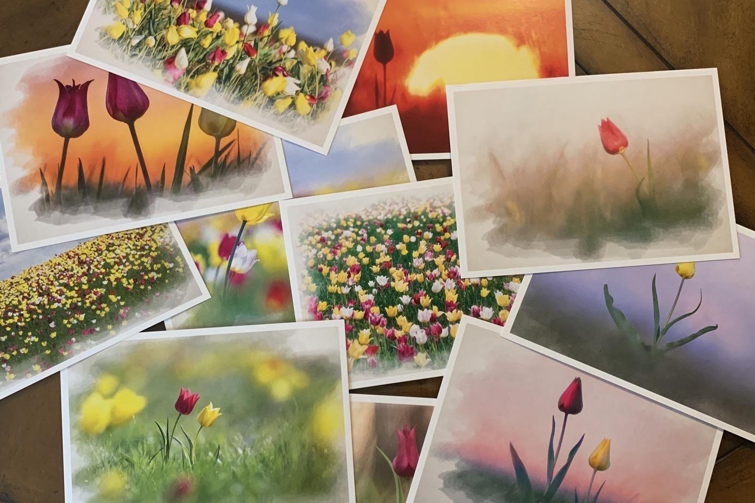 Напечатан тираж наборов открыток в рамках первой части эко-проекта